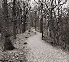 The path through the woods by Jacqueline Moore