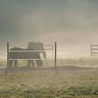 Horses in the mist by otockwa