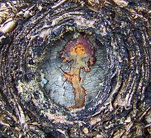 """""""Tree Embryo"""" by debsphotos"""