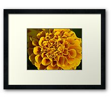 yellow flower poster print closeup macro Framed Print