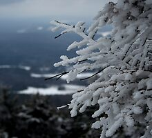 snowy branches by noshin