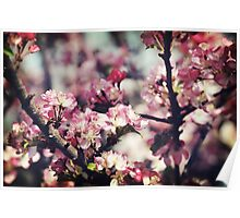 Spring Beauty Poster