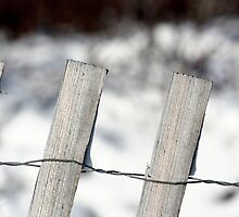 winter fence at Coast Guard by noshin