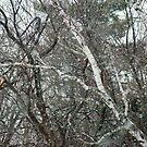 February big snow flakes by Roslyn Lunetta