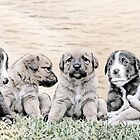 Puppies for sale!  by Qnita
