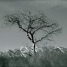 Tree by Adrienne Evans