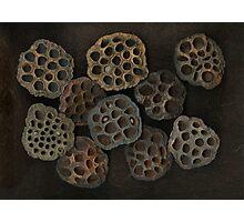 Lotus Pods Photographic Print