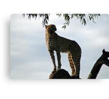 Cheetah. Canvas Print
