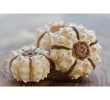 Sputnik Sea Urchin Photographic Print