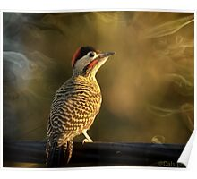 Smokey Green-barred Woodpecker- Enchanting colours Poster