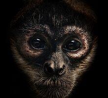 Spider Monkey by Natalie Manuel