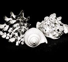 Seashell Beauty by Lynnrmorris