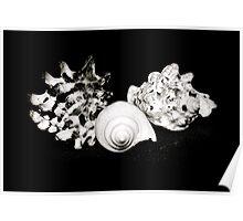 Seashell Beauty Poster