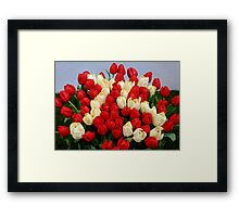 Tulip Bouquet 75 Years Framed Print