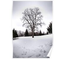Tree in Landscape Early Spring Snow Poster