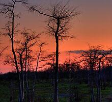 Sunset at Big Cypress National Preserve, Florida by Tomas Abreu