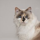 Mia my Kitty by Kimberly Palmer