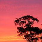 Northwestern skies, Bermuda by triciamary