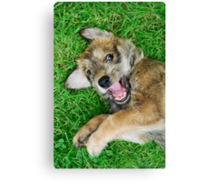 - Giggle - Berger Picard puppy Canvas Print