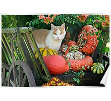 Cat and pumkins Poster