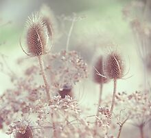 Icy Morning. Wild Grass  by JennyRainbow
