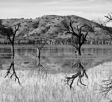 Upside down trees - Lake Hume (2015) by RalphOlsson