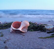 Whelk at Forest St. Beach (Chatham, Cape Cod) by Christopher Seufert
