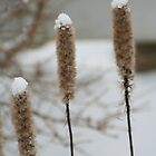 Grass seeds in the snow by Leanne Davis