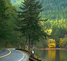 Washington State by Darlene Virgin