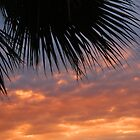 Gavi Sunset by Judi FitzPatrick