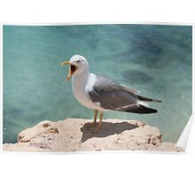 Seagull by water Poster