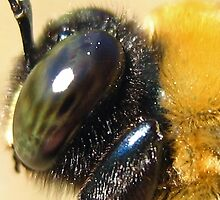 Side Profile of the Carpenter Bee by Heavenandus777
