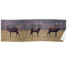 Three Stags Poster