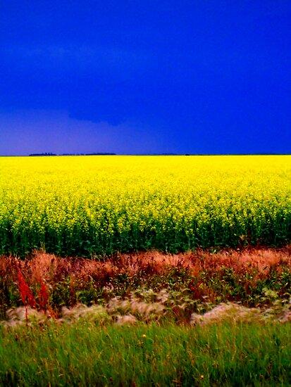 True colours by schizomania