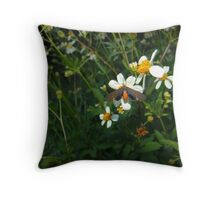 Dahanna atripennis Throw Pillow