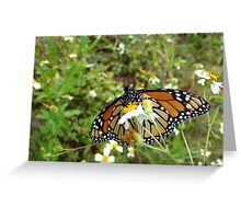 Monarch on Bidens alba Greeting Card