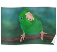 Closer Look (Pacific Parrotlet) - iPad Illustration Poster