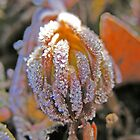 Ice Flower by Stacy Colean