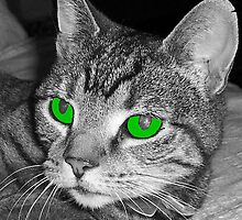 Green Eyed Cat by biglnet