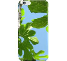 Lessons from Under the Fig Tree iPhone Case/Skin