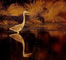 Heron at Dusk by mklue