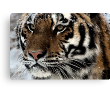 Water Color Tiger Canvas Print