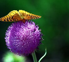 Butter Thistle by Lisa Jones Caldwell