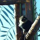 Monkey - Lovely Locks by karenuk1969
