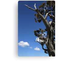 Dying Tree and Clouds 2 Canvas Print