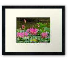On Lotus Pond Framed Print
