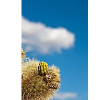 Jumping Cholla Cactus Detail Photographic Print