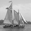 Windjammer Sailing in Booth Bay  by Mary-Anne Ganley