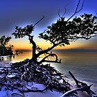 New Turkey Key - Florida Everglades Mangrove by sailorsedge