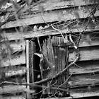 Open Window by AlixCollins
